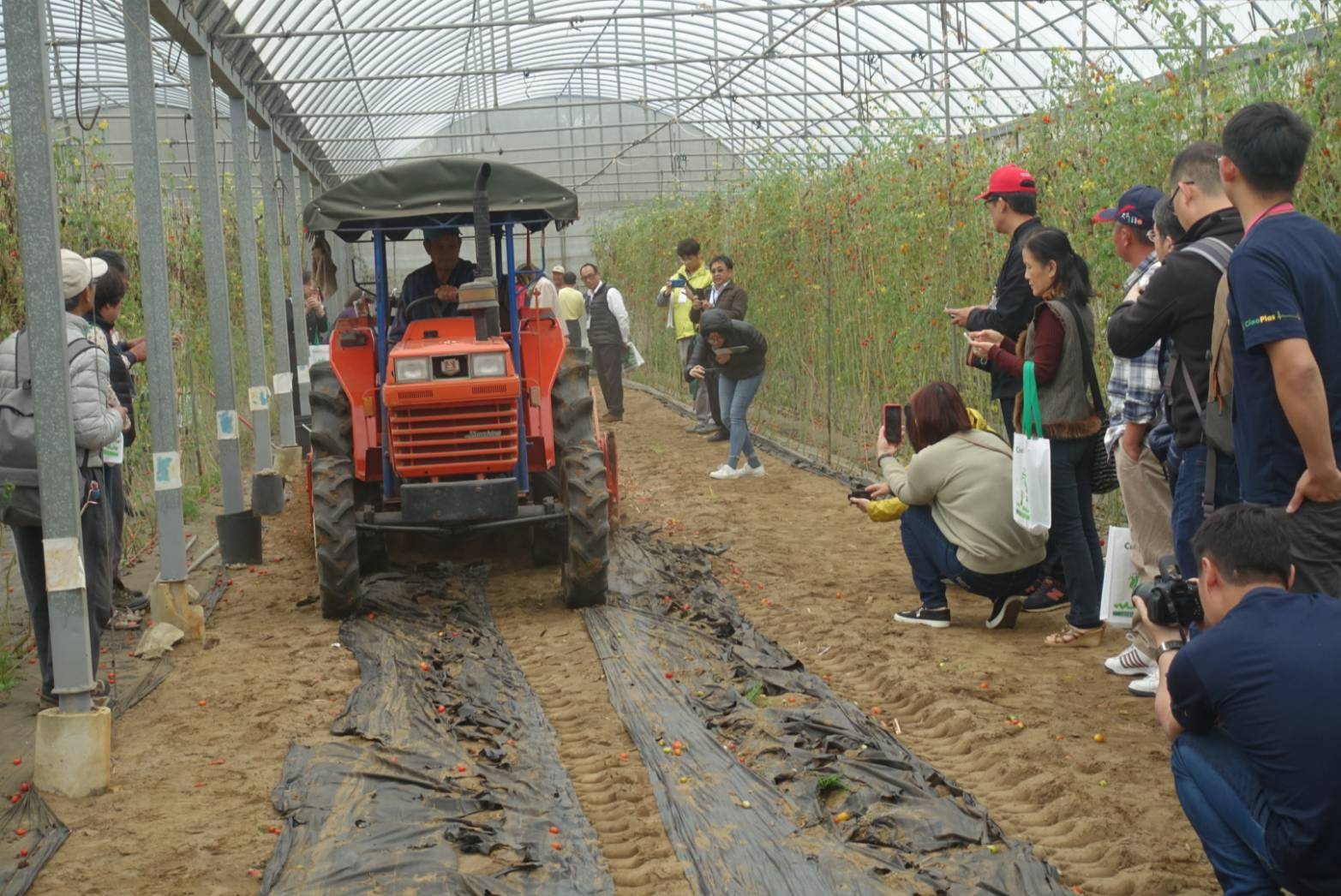 A farmer demonstrated the process of tilling the biodegradable agricultural film into the soil after harvest.