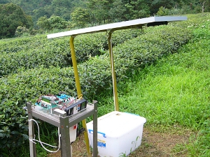 A simple wireless sensor network (WSN) can protect your tea garden from being ravaged by the oriental leafworm moth, a major agricultural pest more commonly known as the tobacco cutworm.