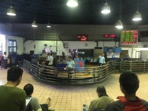 Pig auction in Taoyuan Meat Market.