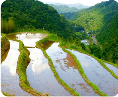 Picture 6: Rice terraces wait to be planted in early spring.